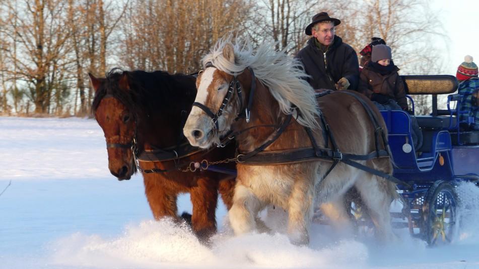 deux chevaux et une charrette dans la neige