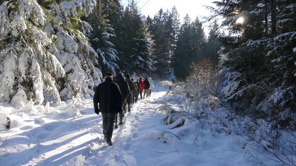 un groupe de marcheur s'enfoncent dans la forêt enneigée