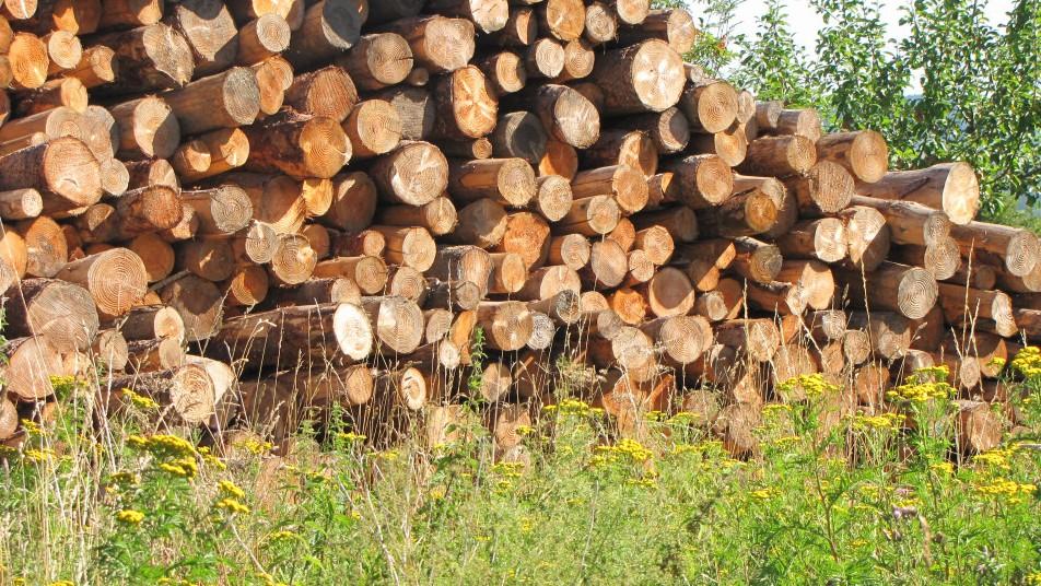 des bois empilés