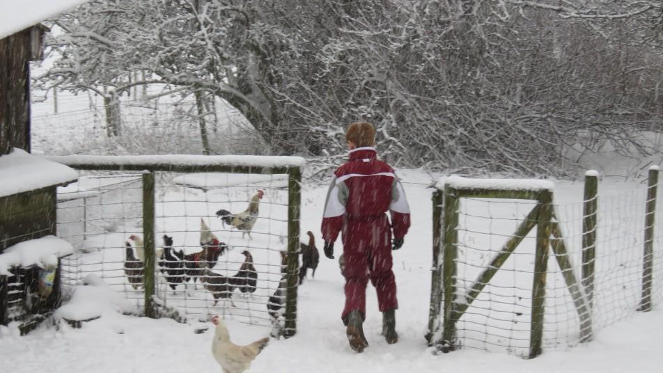 un enfant et des poules dans la neige