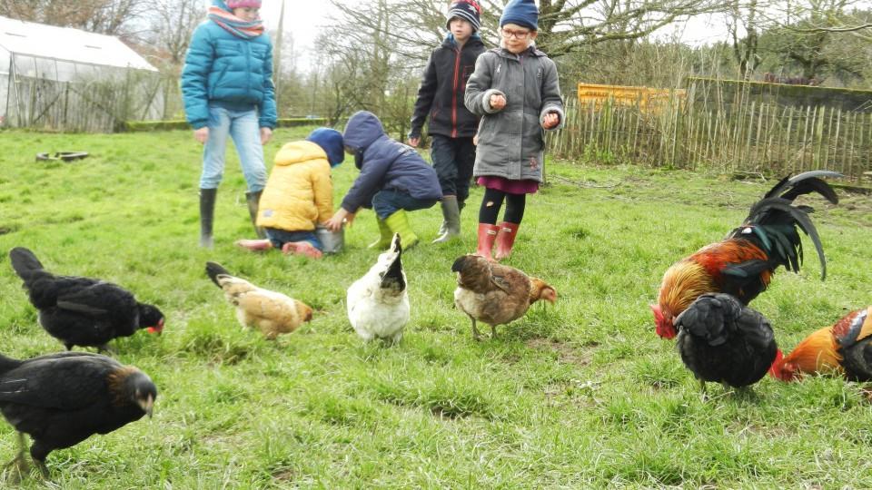 des enfants jouent avec des poules