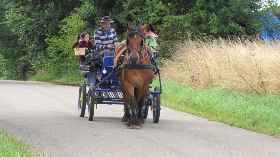 une charrette tirée par un cheval