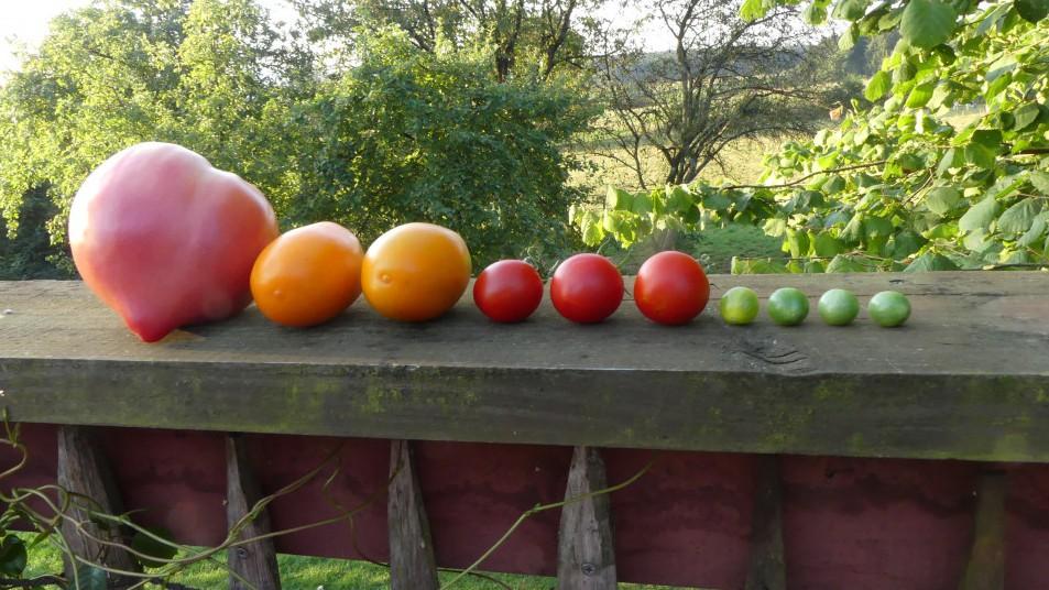 des légumes alignées sur une rambarde en bois