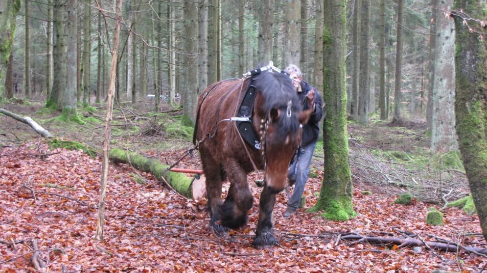 un cheval et son maitre