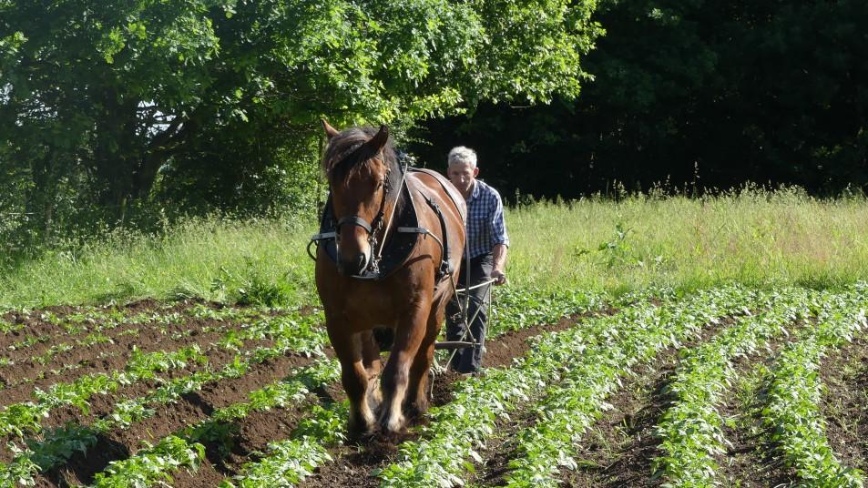 un homme et son cheval de trait