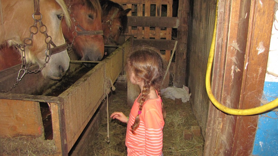 une jeune fille et trois chevaux