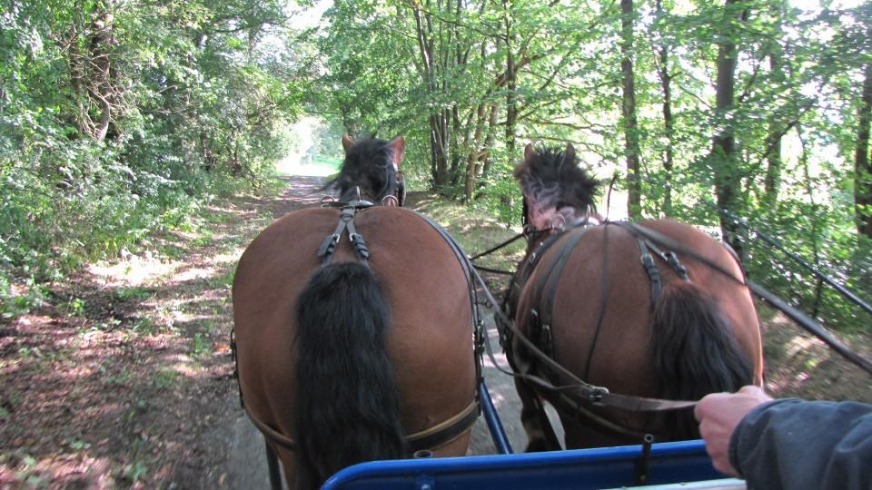 deux chevaux qui tirent une charette