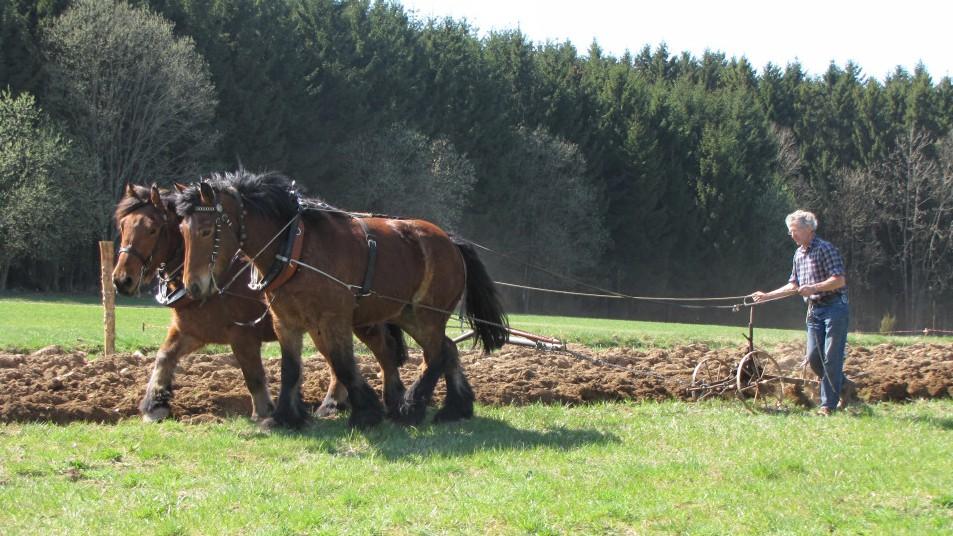 deux chevaux et une charrue