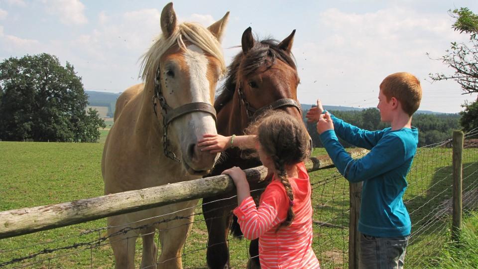deux enfants qui jouent avec deux chevaux